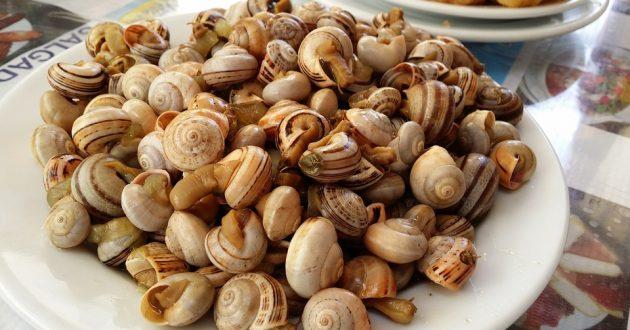 snails-3397918_960_720